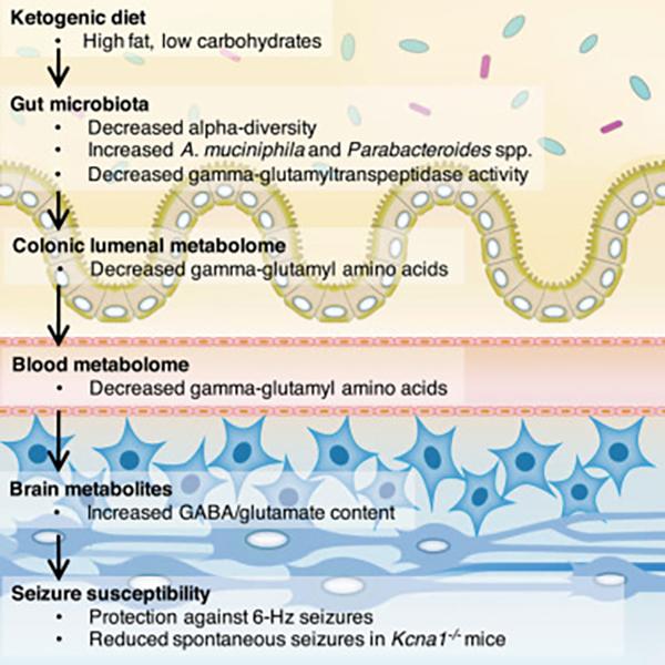 a paraziták széles skálájára szolgáló gyógyszer