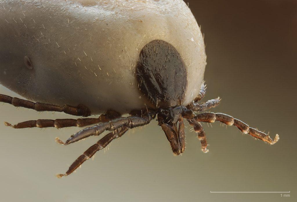 Paraziták, élősködők, férgek