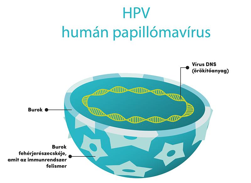humán papillomavírusok rövidítése