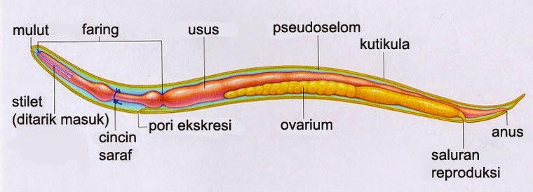 endokrin rák ppt hpv a gégében