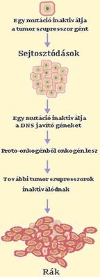 hashártya rák derékfájás