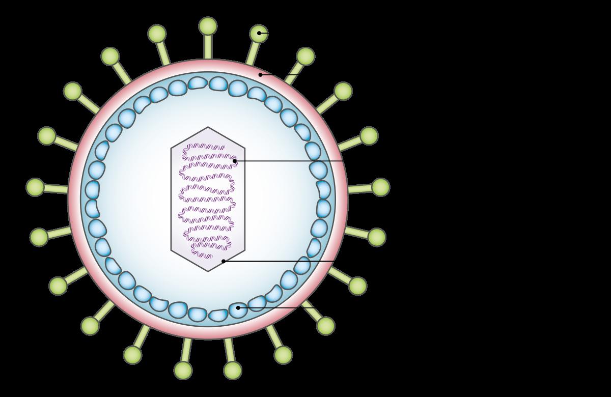 humán papillomavírus italiano