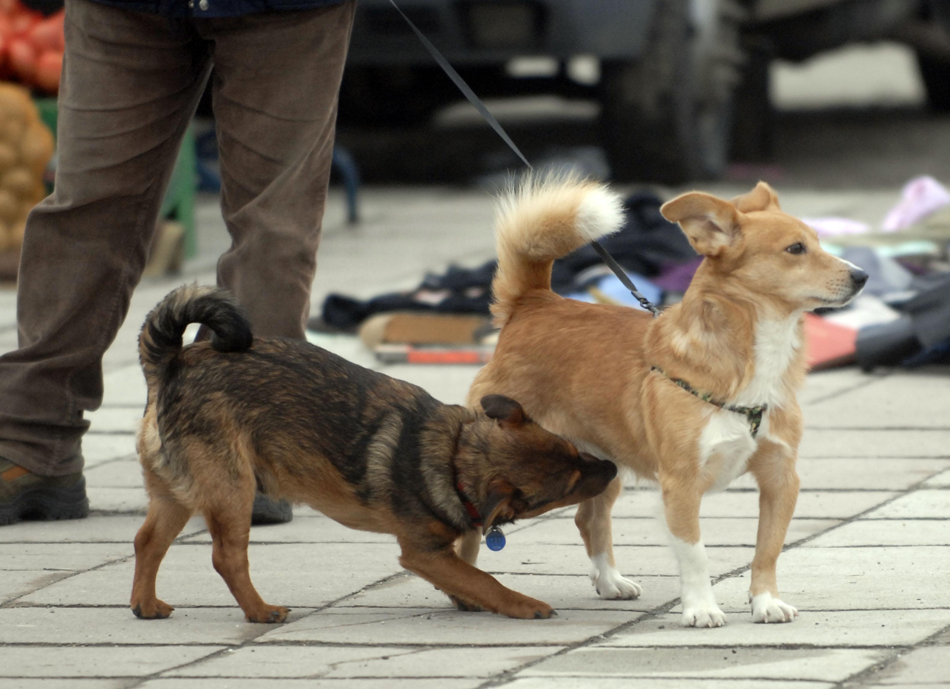 paraziták a psa-ban toxoplazmózis elleni vakcina